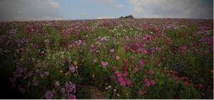 Förderung + Erhalt von Terroirs, Biodiversität und Landschaften